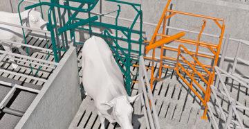 Hayvan Trafiği –  Sağım Merkezi Konsepti